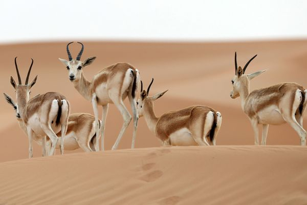 Dans l'Allier, le PAL participe à des programmes de reproduction et de réintroduction d'espèces menacées dans leur milieu naturel. Par exemple, le PAL a réintroduit des oryx qui sont une espèce de bovidé se rapprochant des antilopes.