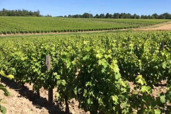 Les viticulteurs ne sont pas épargnés par la crise du Covid-19