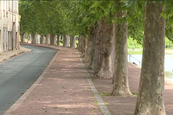 Platanes de Gien sur les bords de la Loire