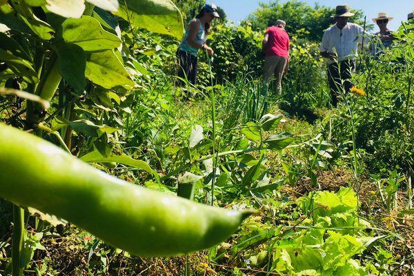 Le collectif Pays d'Aix en transition propose la visite de ses jardins expérimentaux à tous les intéressés.