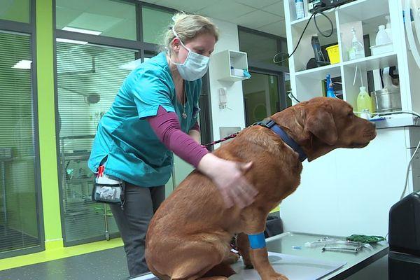 Les soins urgents aux animaux continuent d'être assurés dans les cabinets vétérinaires.