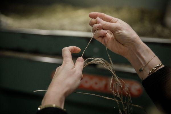 """Chez """"LA Linière"""" dans le Nord la paille, la fibre et l'anas de lin sont récupéré pour la production."""