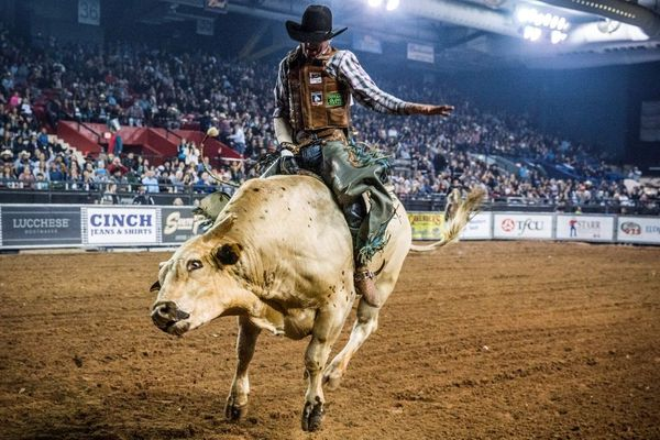 Le rodéo de taureaux est issu de la culture américaine