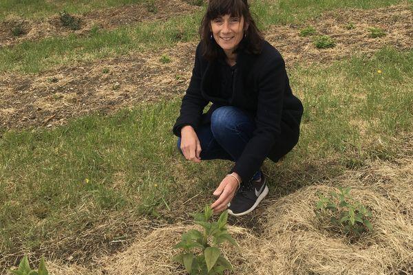 Alexandra Henrissat a décidé de cultiver deux types de terre afin d'avoir un maximum de sortes de fruits et de plantes différentes dans ces cultures.