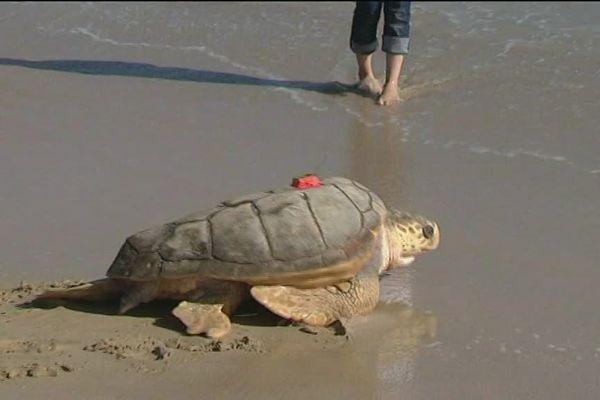 Lâcher de tortues à La Rochelle