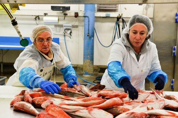 Du poisson invendu est transformé par des ateliers d'insertion.