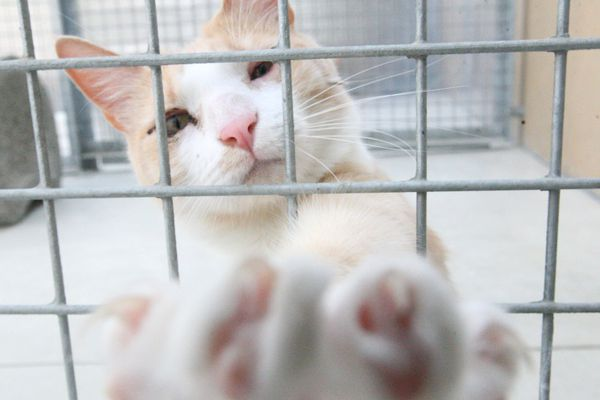 La SPA recueille chaque année de nombreux animaux qu'elle place ensuite dans des refuges.