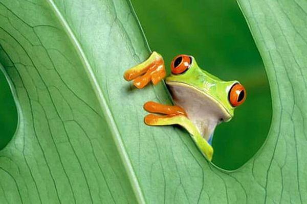 Il pleut, il mouille, c'est la fête à la grenouille...