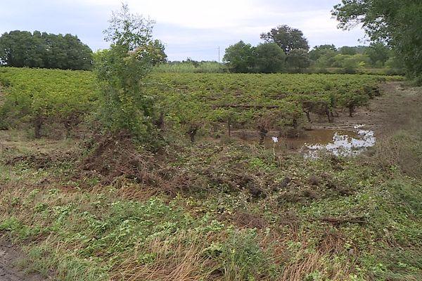 Ces rangs de vignes sur la commune de Vacquières sont sous l'eau après les intempéries du 14 septembre 2021.