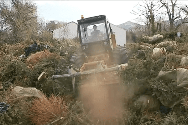 Après les fêtes de Noël, les sapins peuvent être transformés en compost