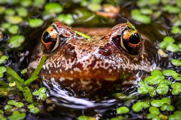 Toutes sortes d'amphibien sont sauvés grâce à ce dispositif.