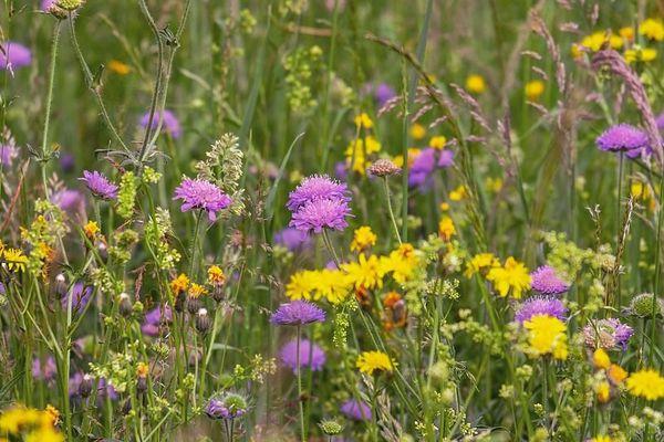 Le beau temps accentue la pollinisation des graminées.
