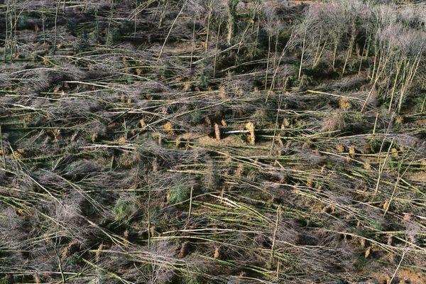 Près d'un quart de la forêt bretonne a été abattue par l'ouragan d'octobre 1987