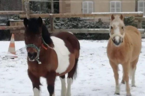 Deux des poneys du centre équestre d'Obernai (Bas-Rhin).