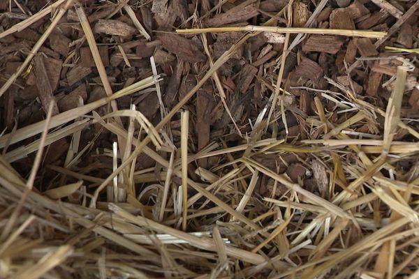 Les copeaux de bois sont une bonne alternative face à l'envolée du prix de la paille.