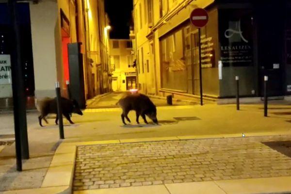 Petite virée nocturne à Nîmes pour ces deux sangliers.