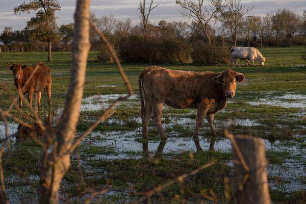 Les incertitudes du climat compliquent le travail des agriculteurs et des éleveurs. Les formations abordent les solutions, aucune n'est un miracle.