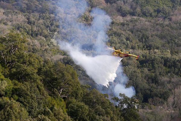Lundi 5 juillet, un incendie a détruit plus de trois hectares de végétation à Lumio, en Balagne.