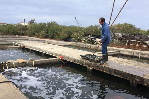 Thierry Laffont a remarqué une déperdition des naissains sur le Bassin d'Arcachon.
