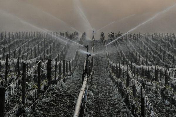 Le vignoble de Chablis est arrosé pour le protéger du gel, vendredi 21 avril 2017.