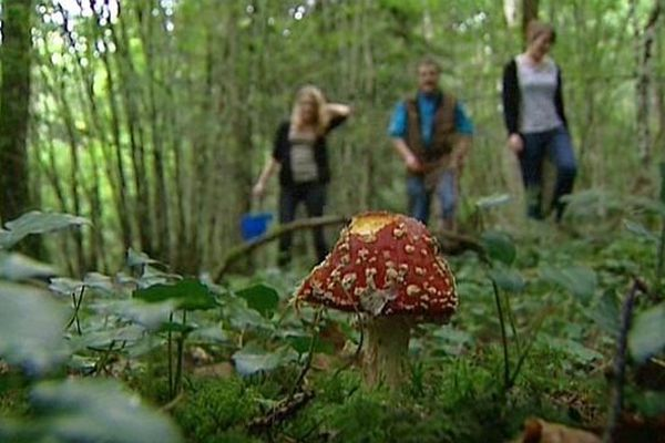 Une amanite tue-mouches, une familière des forêts du Châtillonnais.
