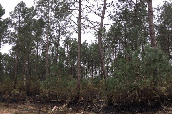 F3A - forêt Lubbon Landes incendie