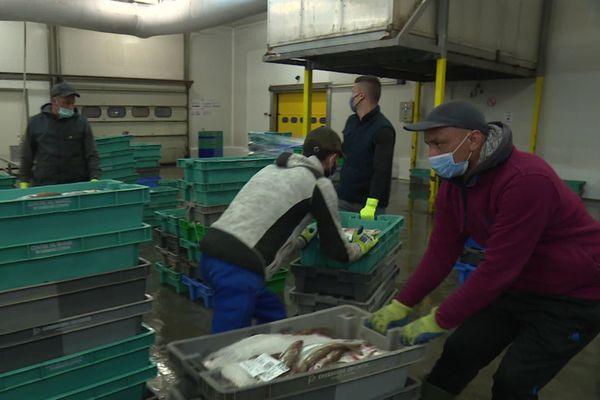Criée de Cherbourg ce 8 septembre 2020 : 40 % de la pêche provient des eaux britanniques. Comment faire sans ?