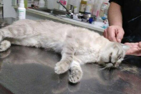 Ce chat a été tué samedi dernier aux Saintes-Maries-de-la-Mer.