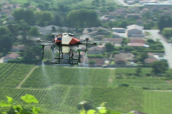En Ardèche, des vignes en forte pente de Cornas sont traitées par drone, dans le cadre d'une expérimentation autorisée par le ministère de l'Agriculture.