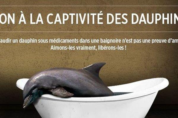 """Le collectif """"C'est assez"""" appelle à manifester contre la captivité des dauphins dans les delphinariums"""