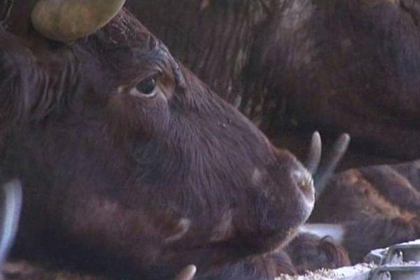 la filière viande bio en Picardie