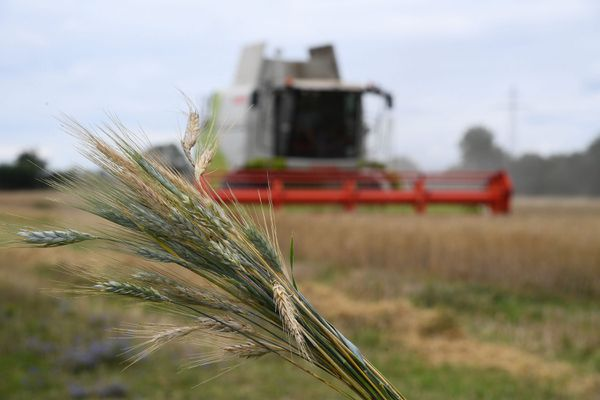 La récolte des céréales en Vendée et Deux-Sèvres en baisse de 45% en 2020, du fait des mauvaises conditions climatiques