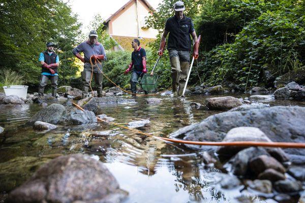 Des pêches de sauvetage sont organisées par la Fédération départementale de pêche du Territoire de Belfort pour venir en aide aux truites.