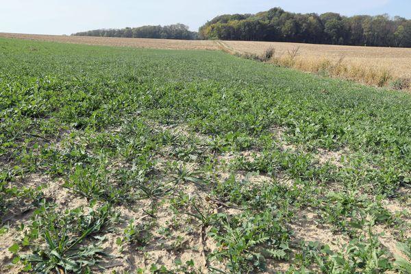 La situation ne s'arrange pas sur le front de la sécheresse en Haute-Saône