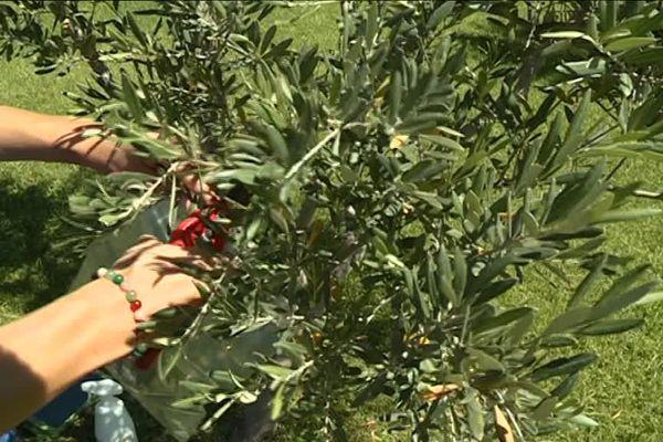 Les services sanitaires demandent l'arrachage de certaines plantes à titre préventif.