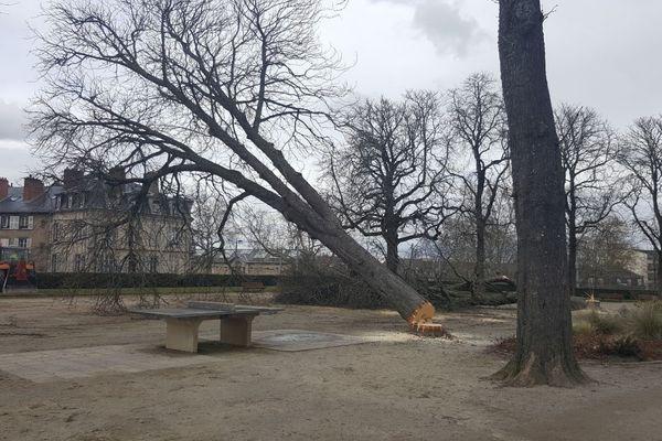 Huit marronniers centenaires trop fragilisés seront abattus cette semaine au Jardin d'Orsay à Limoges