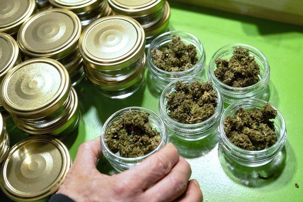 Le CBD est une sous-espèce de cannabis. Il est légal lorsqu'il est dépourvu de THC, la molécule aux effets psychotropes.