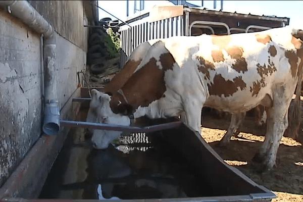 Dans un élevage du Rhône le 20/07/2015