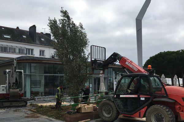 Pour un effet plus rapide, des arbres déjà grands ont été plantés place du Commando
