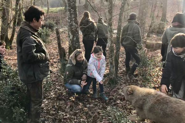 Evoluer avec 7 jeunes loups d'Europe sur leur terrain de jeu, en forêt...
