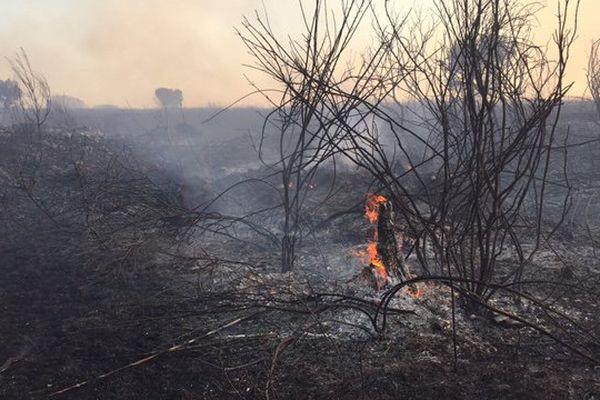 60 ha de garrigue brûlée au nord de Montpellier le 6 septembre 2017