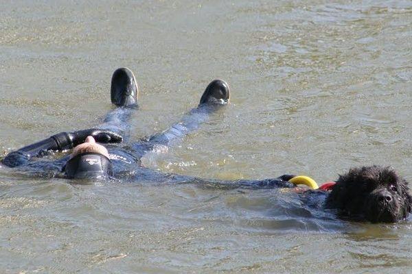 Des chiens sauveteurs participent aux championnats à Trévou-Tréguignec (22)