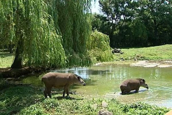 Avec les fortes chaleurs qui règnent depuis plusieurs semaines, les bains sont les bienvenus pour les animaux du parc de l'Auxois.