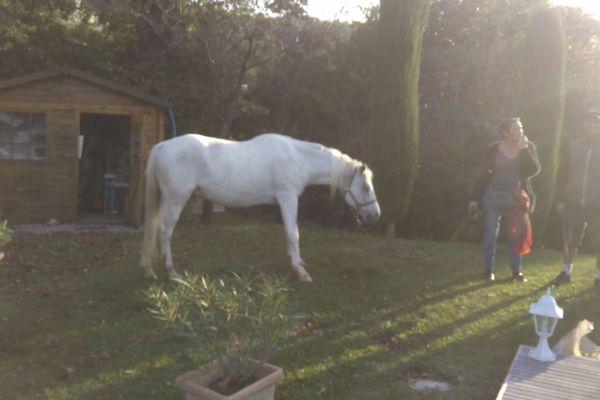 Le cheval enfin au sec