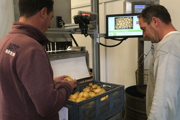 Le calibrage des pommes de terre se fait automatiquement grâce à l'innovation de ces Aubois.