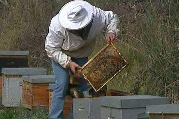 Sauvian (Hérault) - les ruches ne produisent que peu de miel - 11 mars 2014.