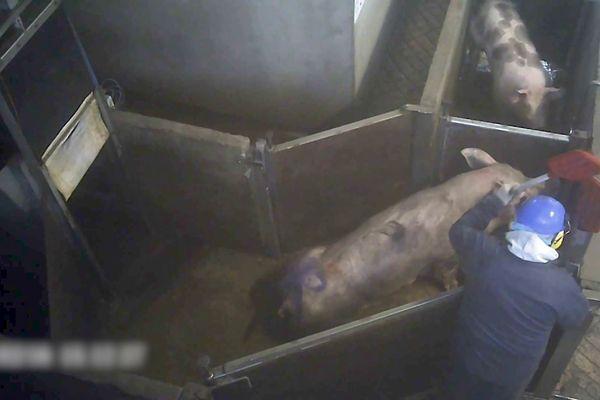 L'association L214 porte plainte pour sévices graves contre l'abattoir. Elle demande sa fermeture.