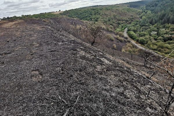 Mercredi 25 août, 68 hectares de végétation ont brûlé à Montluçon dans l'Allier.