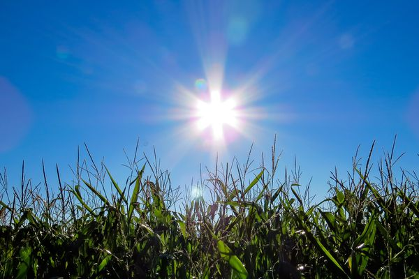 Grand soleil ce vendredi selon Météo France
