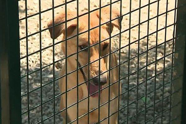 """L'un des chiens du refuge animalier de Rivesaltes """"Un gîte, une gamelle"""""""